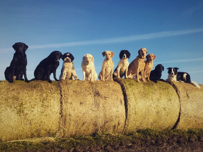 dogs-on-bales-hires
